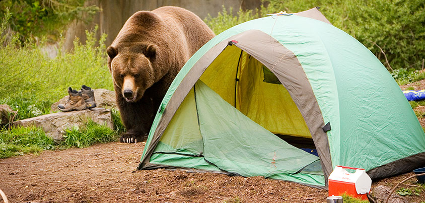 hang food away from tent prevent bears